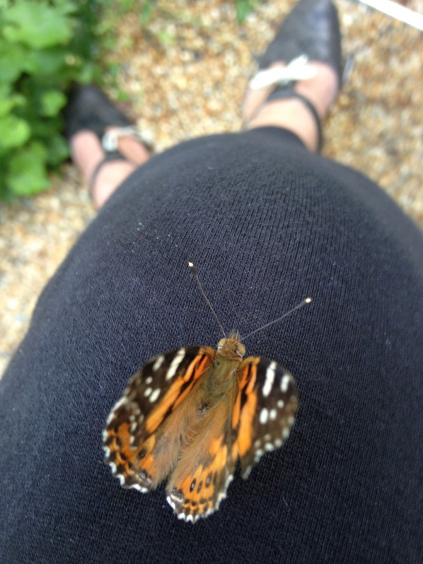 Butterfly {treasure}