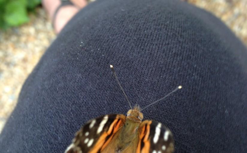 Butterfly {treasure}